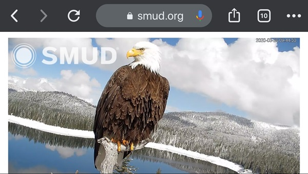 image of eagle cam on mobile device