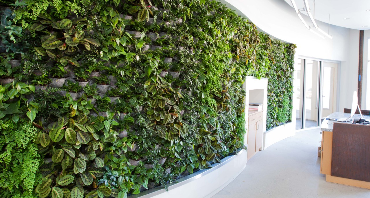 Lobby of Arch Nexus building with plants on the wall