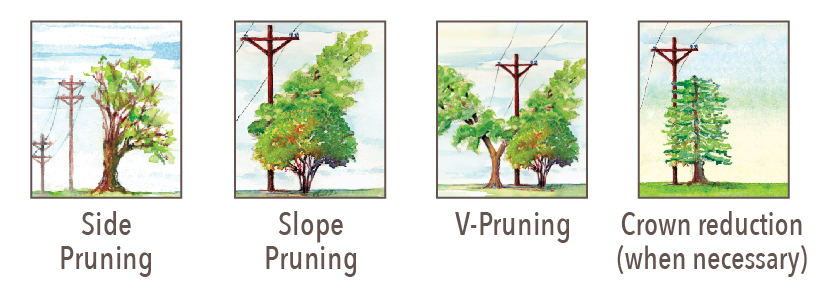 tree pruning strategies
