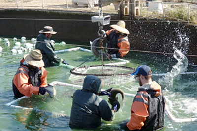 Netting big energy savings at local fish farms