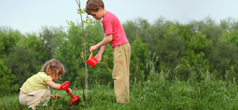 two boys watering young tree